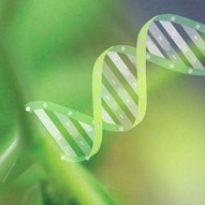 Millenium Nucleos for plant functional genomics
